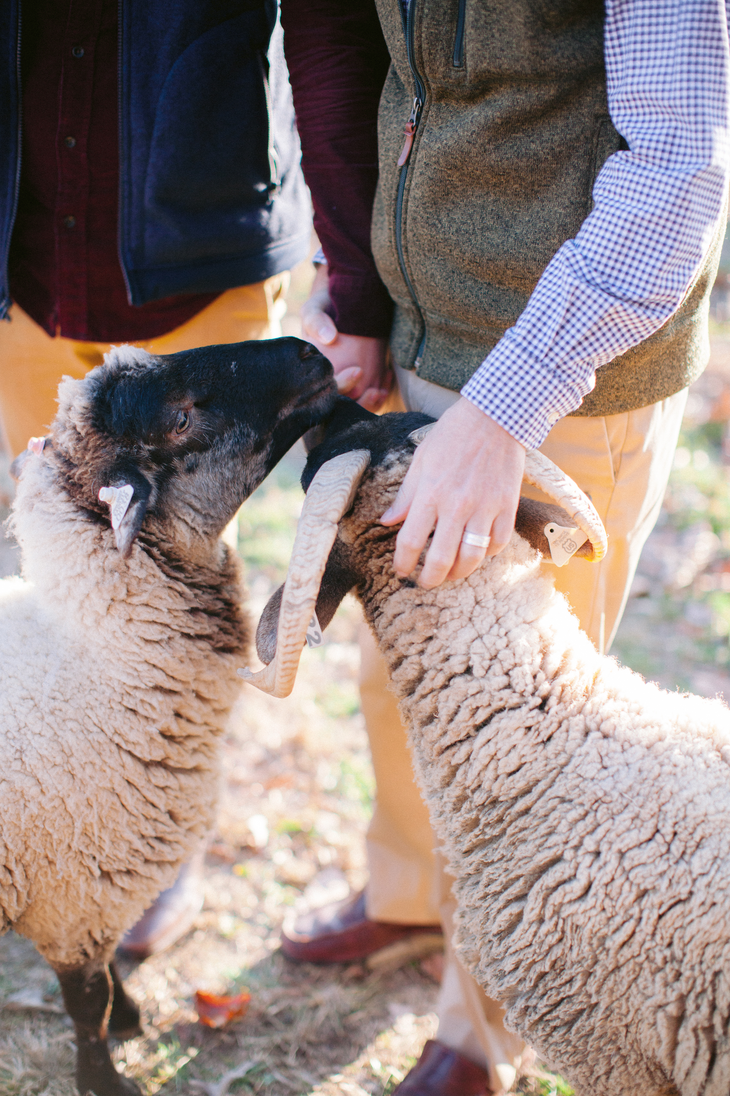 Aisle Society for Minted Farm Engagement Session Nikki Santerre (21)