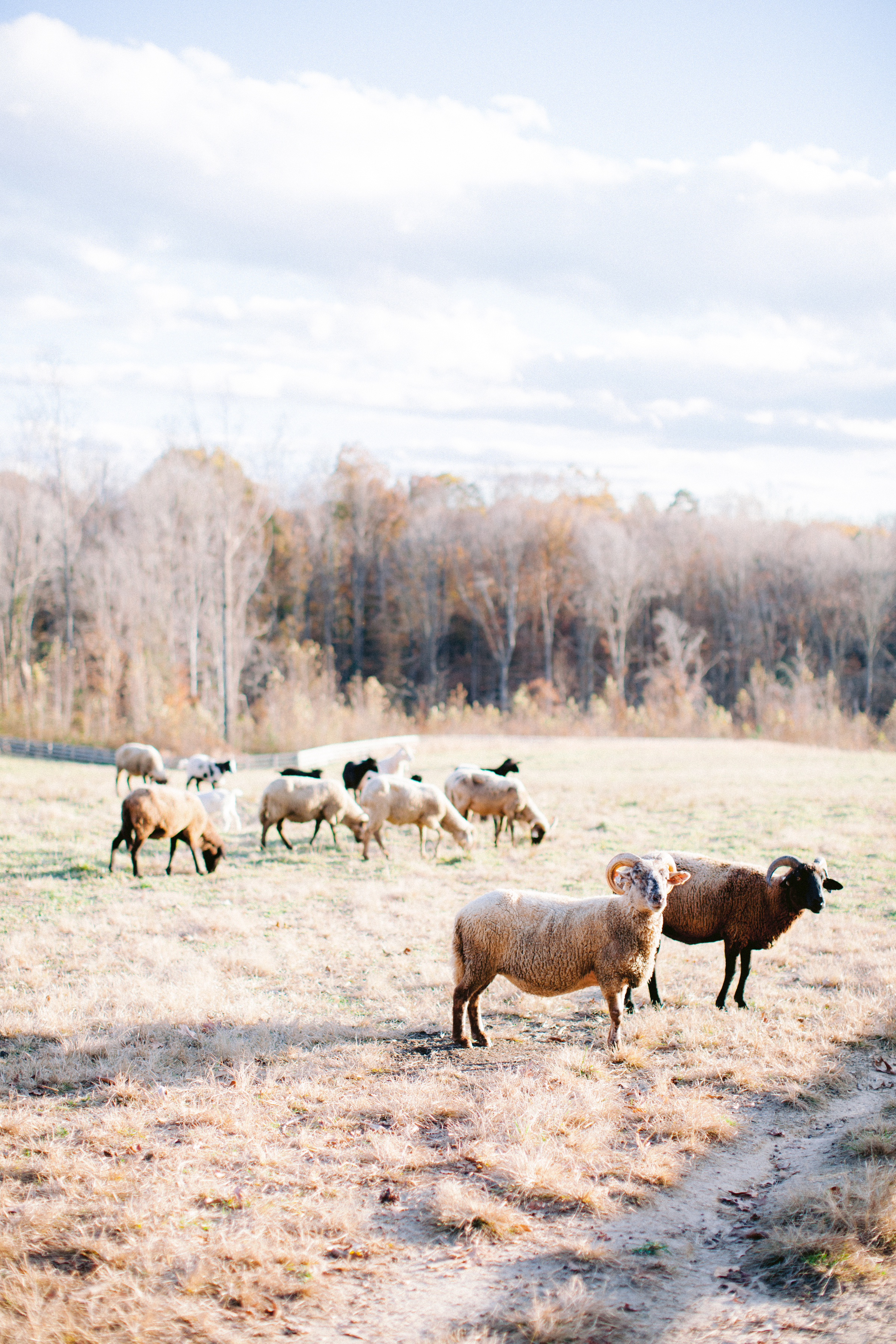 Aisle Society for Minted Farm Engagement Session Nikki Santerre (29)