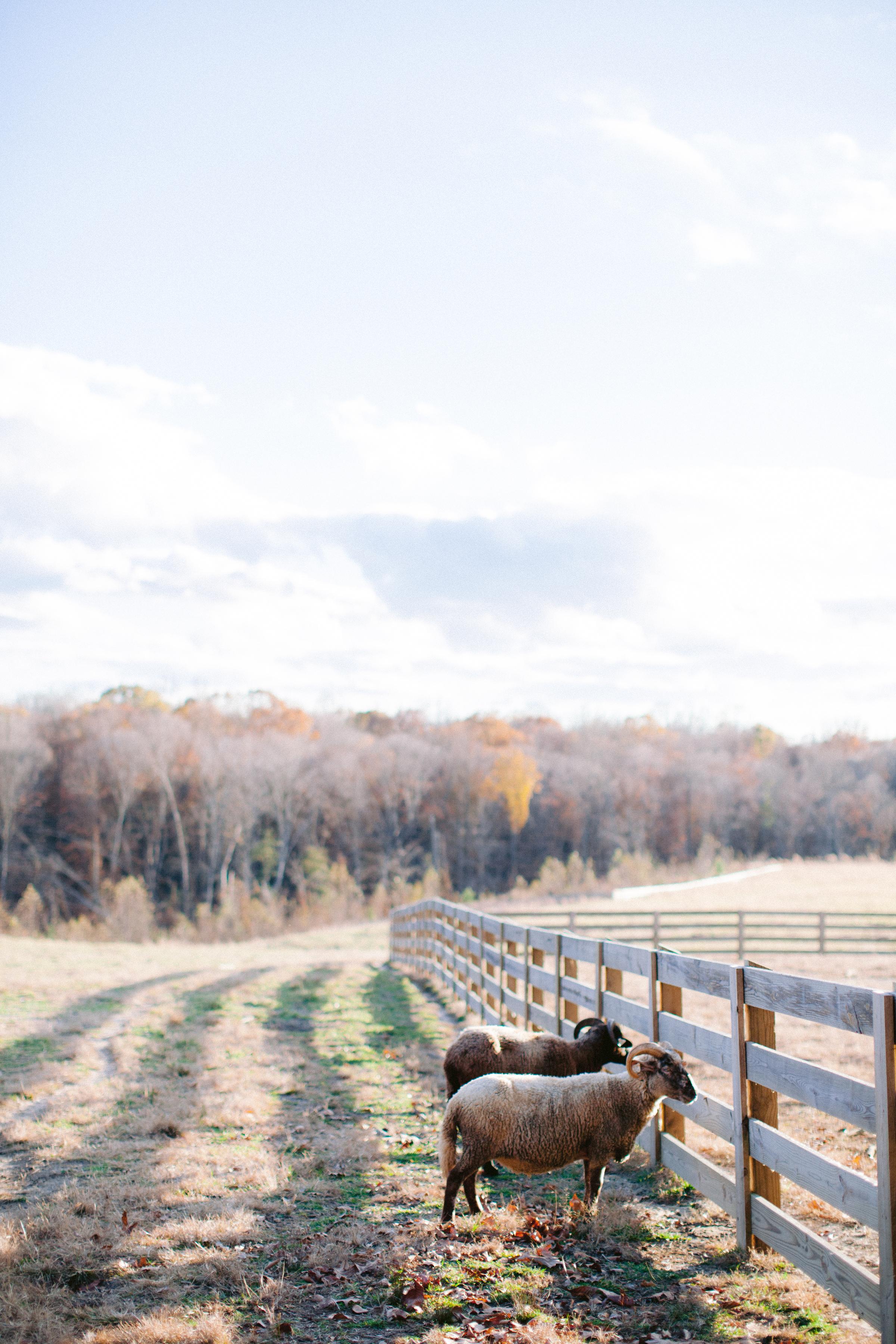Aisle Society for Minted Farm Engagement Session Nikki Santerre (33)