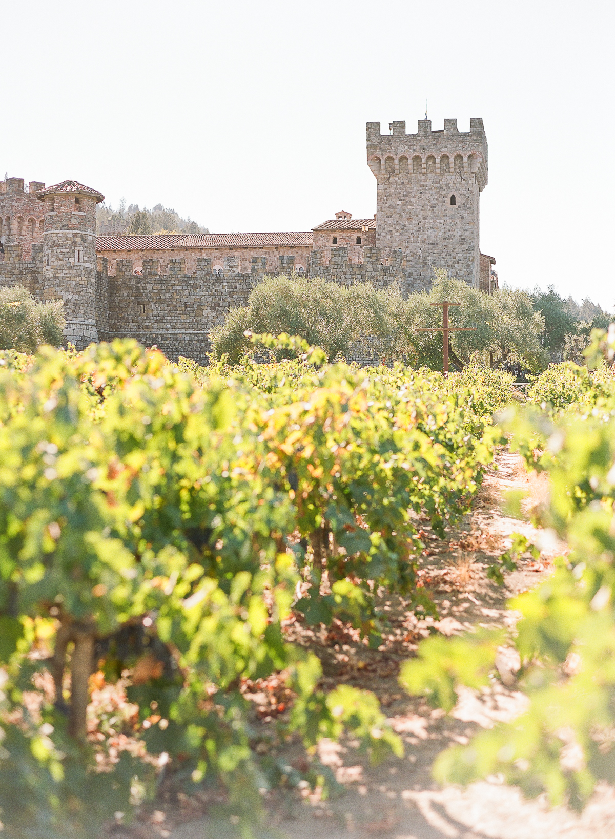 Castello di Amorosa Engagement Session in Napa The Ganeys06