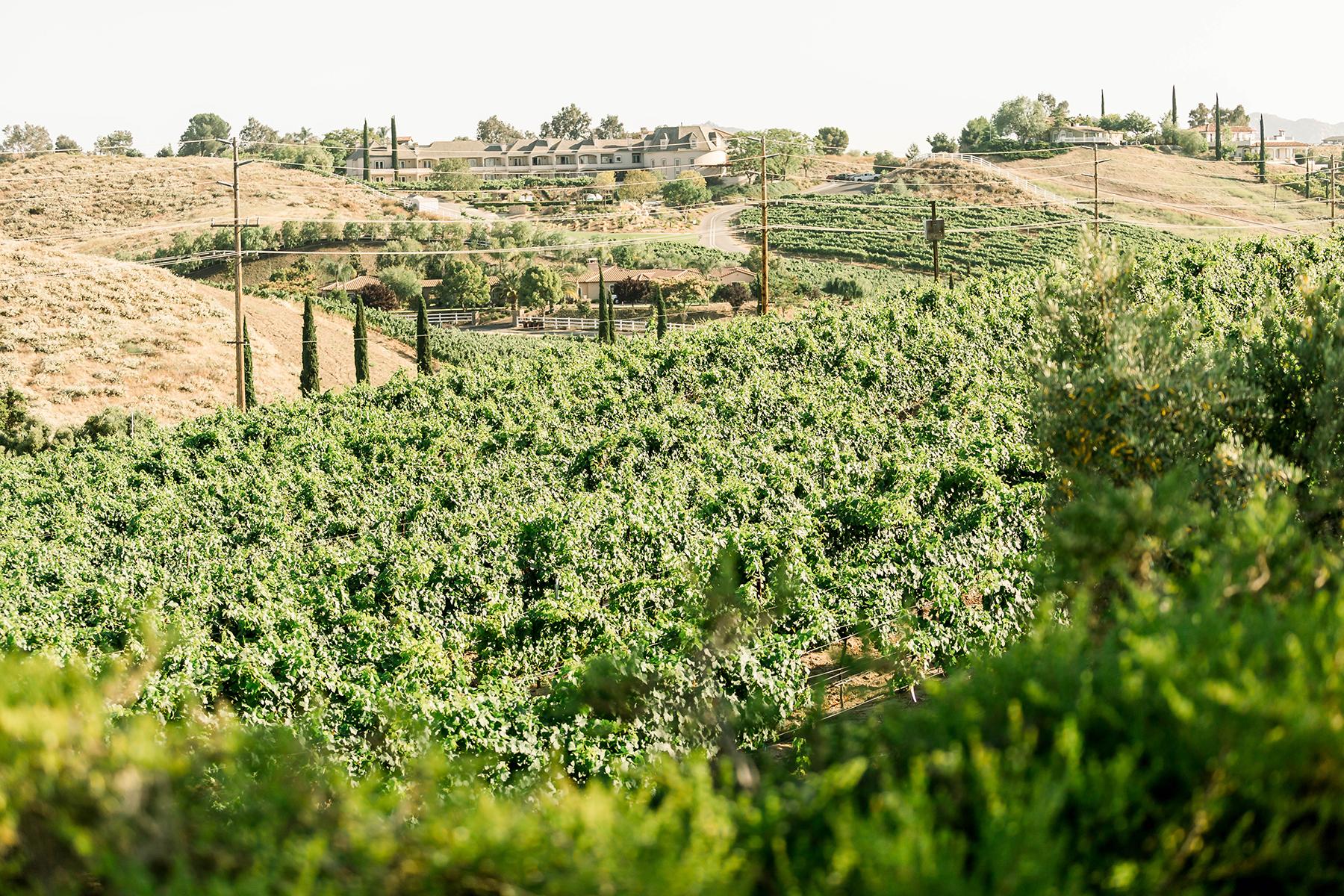 Sweet Vineyard Proposal in California Janita Mestre01