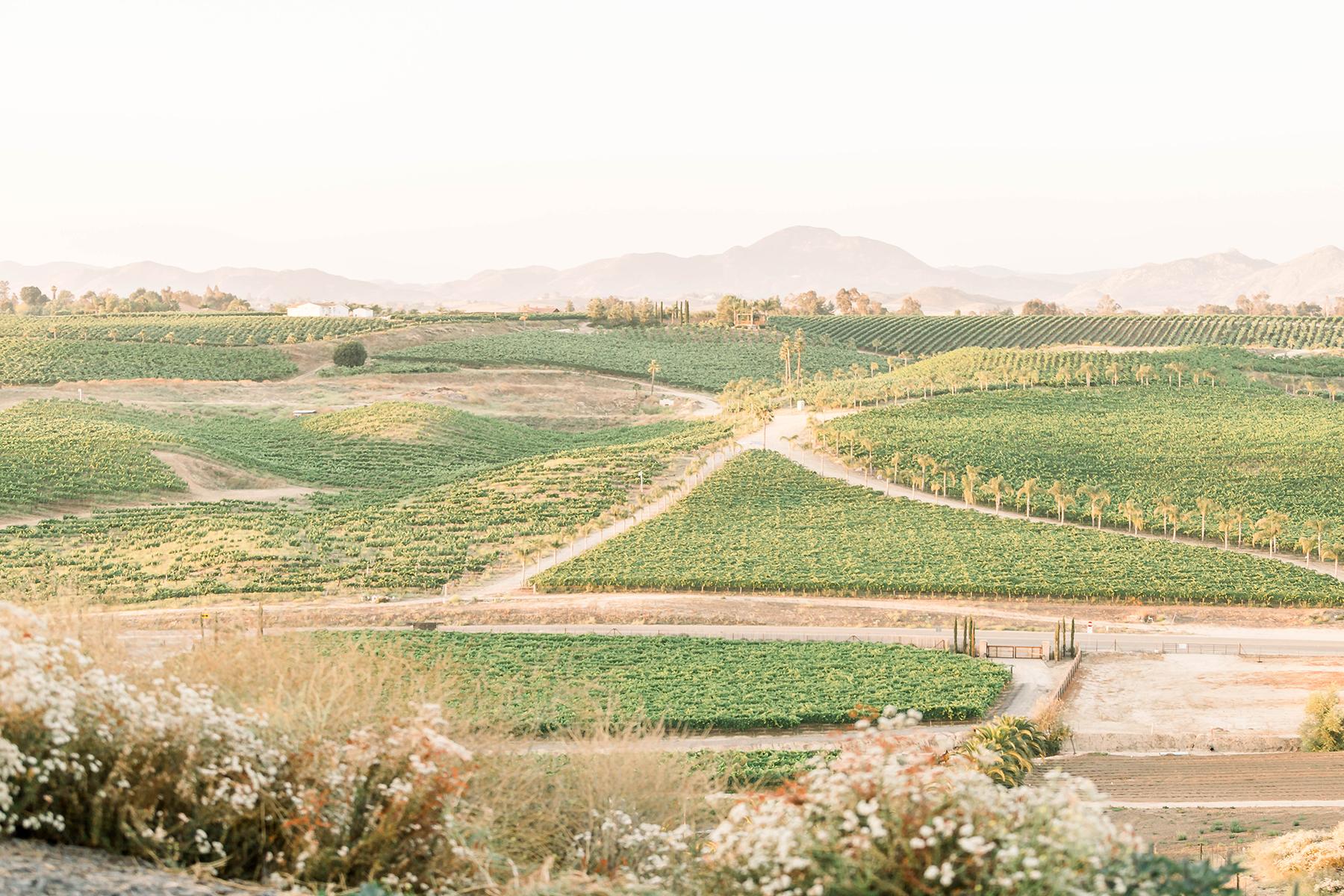 Sweet Vineyard Proposal in California Janita Mestre03