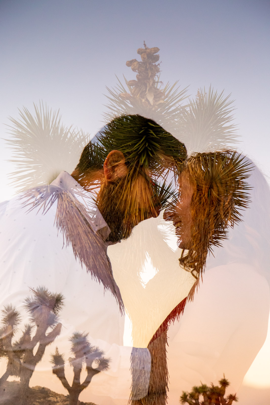 Joshua-Tree-Halie-West-Photography-20