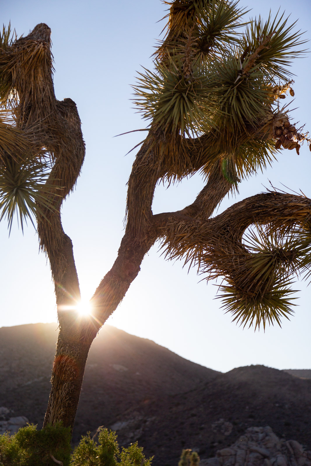 Joshua-Tree-Halie-West-Photography-36